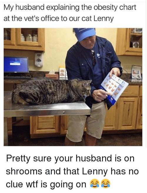 Funny, Lenny, and Wtf: My husband explaining the obesity chart  at the vet's office to our cat Lenny Pretty sure your husband is on shrooms and that Lenny has no clue wtf is going on 😂😂