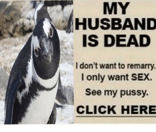 Click, Dank, and Pussy: MY  HUSBAND  IS DEAD  I don't want to remarry.  I only want SEX.  See my pussy.  CLICK HERE