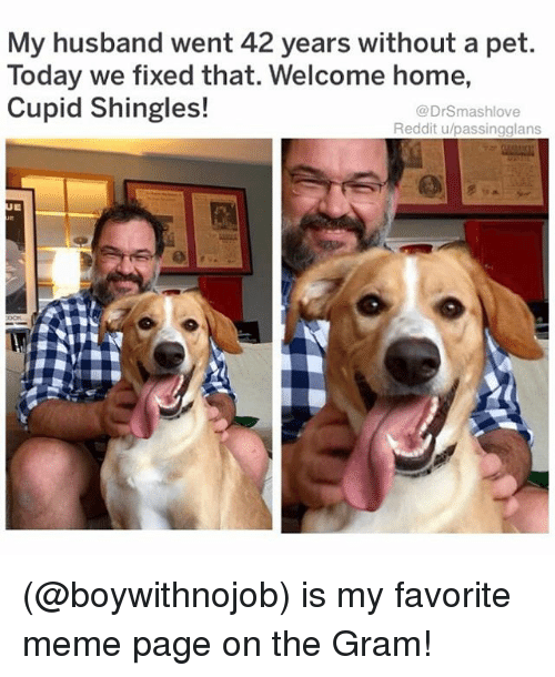 Meme, Memes, and Reddit: My husband went 42 years without a pet.  Today we fixed that. Welcome home,  Cupid Shingles!  @DrSmashlove  Reddit u/passingglans (@boywithnojob) is my favorite meme page on the Gram!
