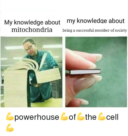 Mitochondria, Knowledge, and Society: My knowledge about my knowledae about  mitochondria being a successful member of society <p>💪powerhouse💪of💪the💪cell💪</p>