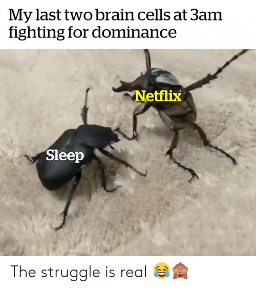 Netflix, Struggle, and The Struggle Is Real: My last two brain cells at 3am  fighting for dominance  Netflix  Sleep The struggle is real 😂🙈