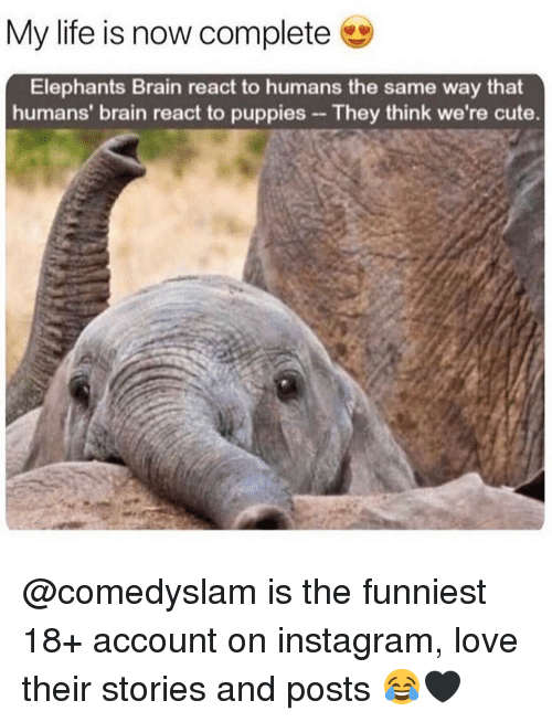 Cute, Instagram, and Life: My life is now complete  Elephants Brain react to humans the same way that  humans' brain react to puppies They think we're cute. @comedyslam is the funniest 18+ account on instagram, love their stories and posts 😂🖤
