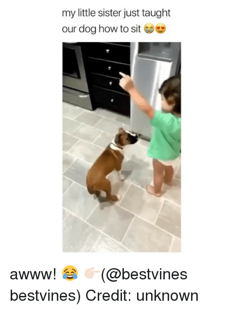 Memes, How To, and Awww: my little sister just taught  our dog how to sit awww! 😂 👉🏻(@bestvines bestvines) Credit: unknown