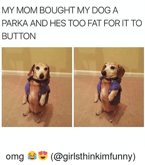 Memes, Omg, and Fat: MY MOM BOUGHT MY DOG A  PARKA AND HES TOO FAT FOR IT TO  BUTTON omg 😂😍 (@girlsthinkimfunny)