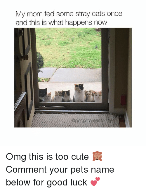 Cats, Cute, and Memes: My mom fed some stray cats once  and this is what happens now Omg this is too cute 🙈 Comment your pets name below for good luck 💕