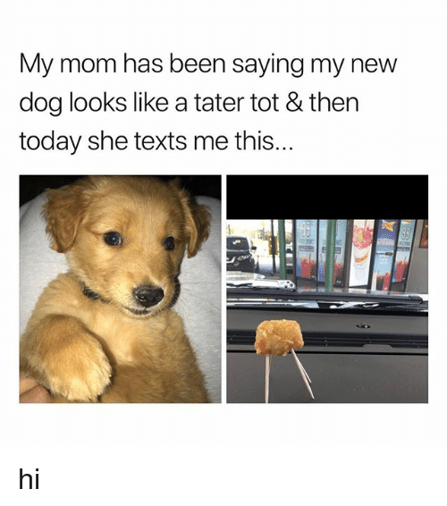 Today, Texts, and Mom: My mom has been saying my new  dog looks like a tater tot & ther  today she texts me this... hi