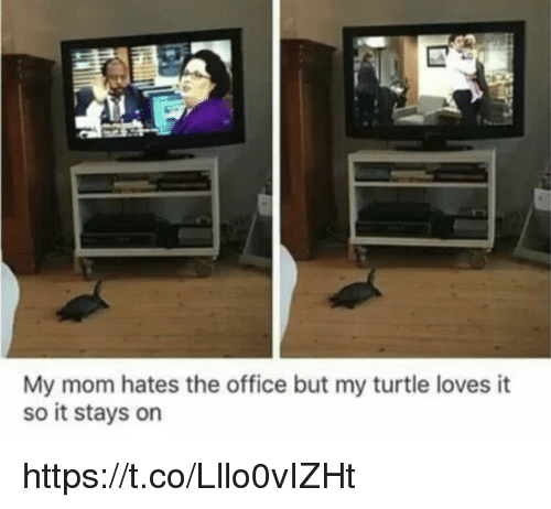Memes, The Office, and Office: My mom hates the office but my turtle loves it  so it stays on https://t.co/Lllo0vIZHt
