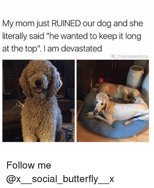"Memes, Butterfly, and Mom: My mom just RUINED our dog and she  literally said ""he wanted to keep it long  at the top"". I am devastated  @theblessedone Follow me @x__social_butterfly__x"