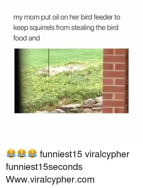 feeder: my mom put oil on her bird feeder to  keep squirrels from stealing the bird  food and 😂😂😂 funniest15 viralcypher funniest15seconds Www.viralcypher.com