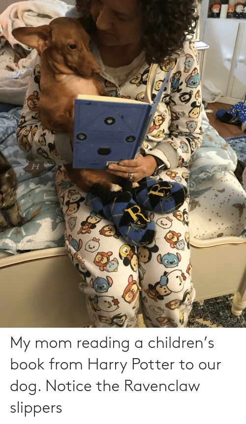 ravenclaw: My mom reading a children's book from Harry Potter to our dog. Notice the Ravenclaw slippers