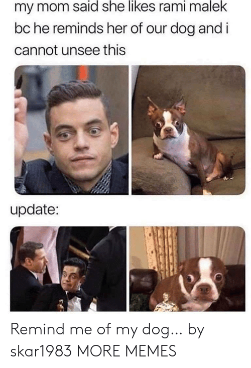 She Likes: my mom said she likes rami malek  bc he reminds her of our dog and i  cannot unsee this  update: Remind me of my dog… by skar1983 MORE MEMES