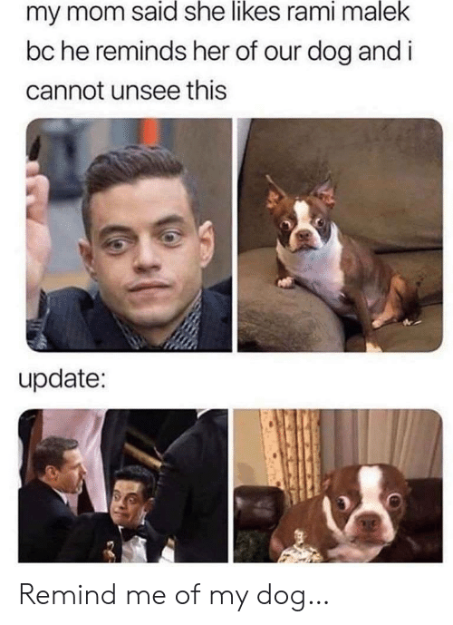 She Likes: my mom said she likes rami malek  bc he reminds her of our dog and i  cannot unsee this  update: Remind me of my dog…