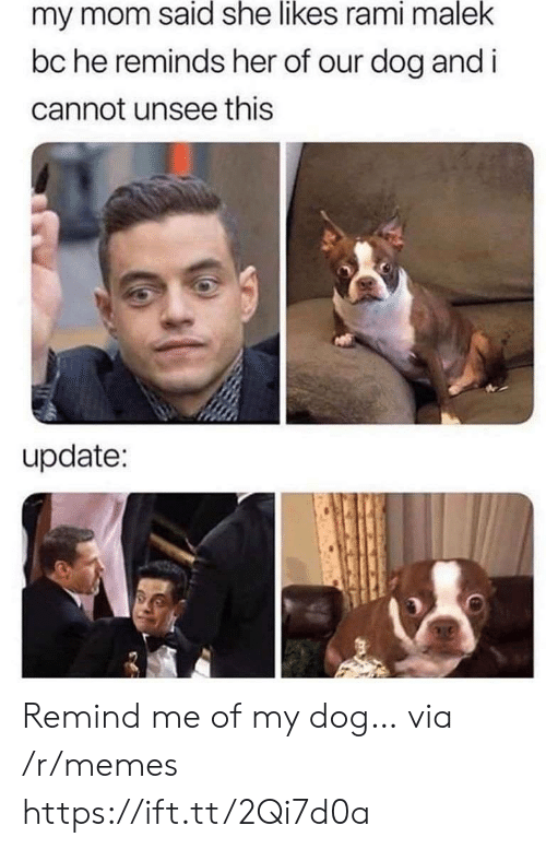 She Likes: my mom said she likes rami malek  bc he reminds her of our dog and i  cannot unsee this  update: Remind me of my dog… via /r/memes https://ift.tt/2Qi7d0a