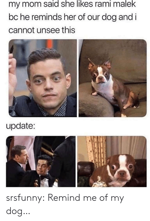 She Likes: my mom said she likes rami malek  bc he reminds her of our dog and i  cannot unsee this  update: srsfunny:  Remind me of my dog…