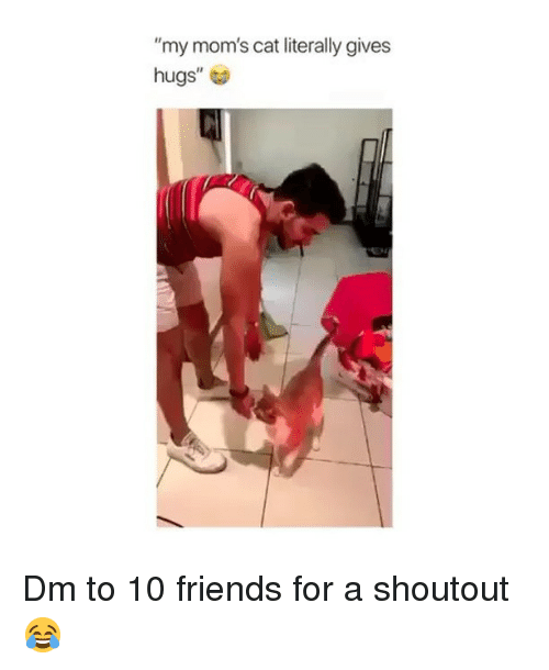 """Friends, Memes, and Moms: """"my mom's cat literally gives  hugs"""" Dm to 10 friends for a shoutout 😂"""