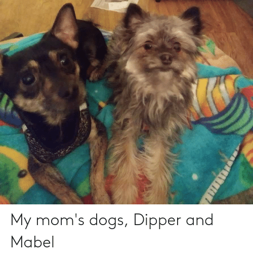 dipper: My mom's dogs, Dipper and Mabel