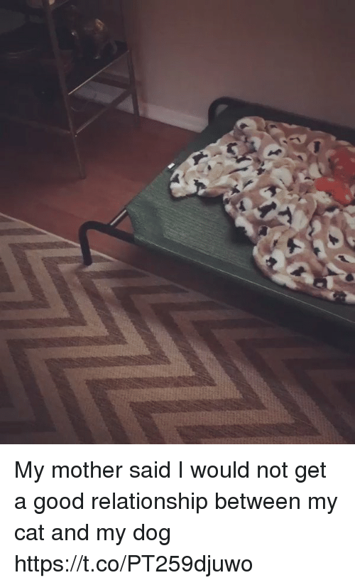 Good, Girl Memes, and Dog: My mother said I would not get a good relationship between my cat and my dog https://t.co/PT259djuwo