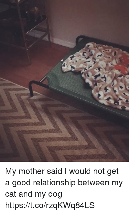 Good, Girl Memes, and Dog: My mother said I would not get a good relationship between my cat and my dog https://t.co/rzqKWq84LS