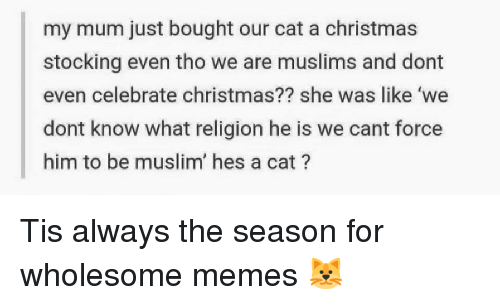 Christmas, Memes, and Muslim: my mum just bought our cat a christmas  stocking even tho we are muslims and dont  even celebrate christmas?? she was like 'we  dont know what religion he is we cant force  him to be muslim' hes a cat? <p>Tis always the season for wholesome memes 🐱</p>