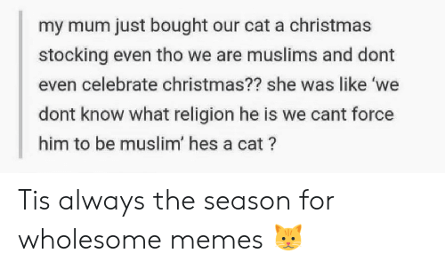 Stocking: my mum just bought our cat a christmas  stocking even tho we are muslims and dont  even celebrate christmas?? she was like 'we  dont know what religion he is we cant force  him to be muslim' hes a cat? Tis always the season for wholesome memes 🐱