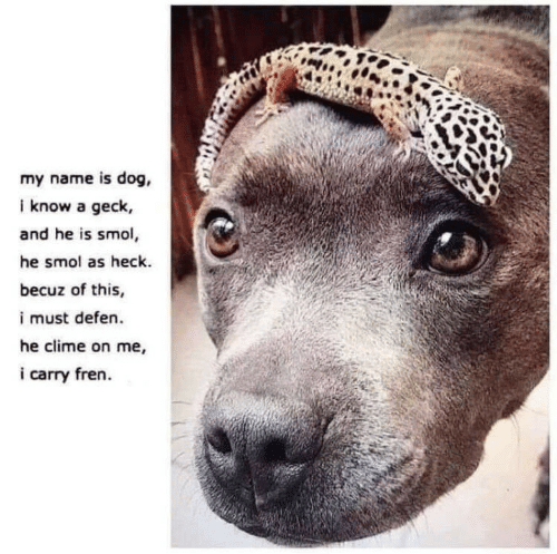 Fren: my name is dog,  i know a geck,  and he is smol,  he smol as heck.  becuz of this,  i must defen.  he clime on me,  i carry fren
