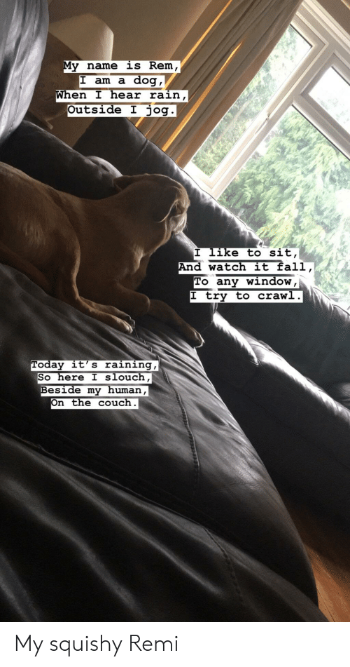 My Squishy: My name is Rem  dog,  When I hear rain,  Outside I jog.  I am a  I like to sit,  And watch it fall,  To any window,  |I try to crawl.  Today it's raining,  So here I slouch,  Beside my human,  On the couch My squishy Remi