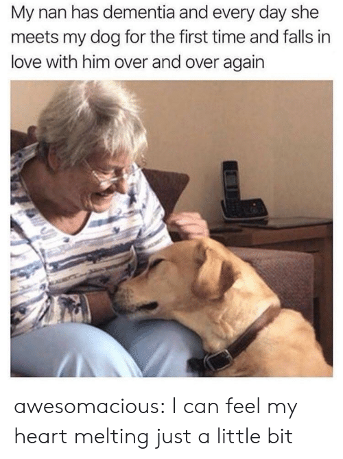just a little bit: My nan has dementia and every day she  meets my dog for the first time and falls in  love with him over and over again awesomacious:  I can feel my heart melting just a little bit