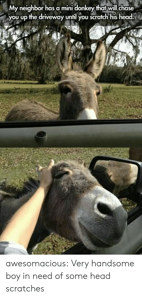 Donkey: My neighbor has a mini donkey that will chase  you up the driveway until you scratch his head. awesomacious:  Very handsome boy in need of some head scratches