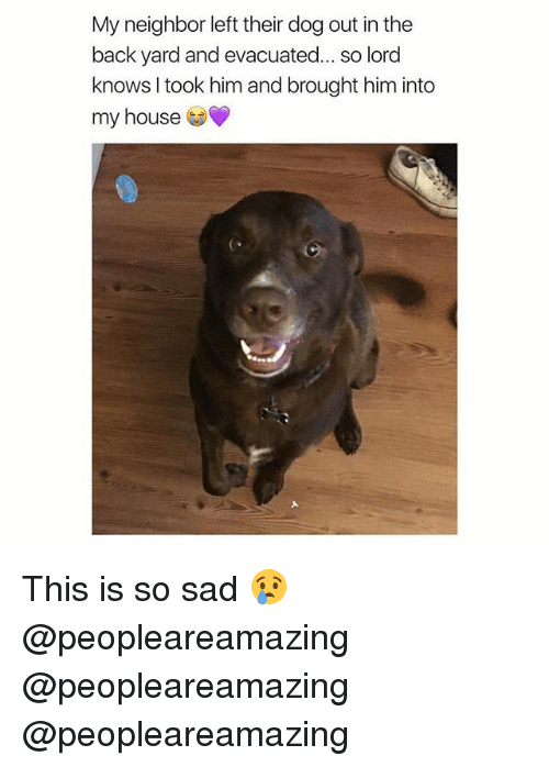 Memes, My House, and House: My neighbor left their dog out in the  back yard and evacuated... so lord  knows I took him and brought him into  my house This is so sad 😢 @peopleareamazing @peopleareamazing @peopleareamazing