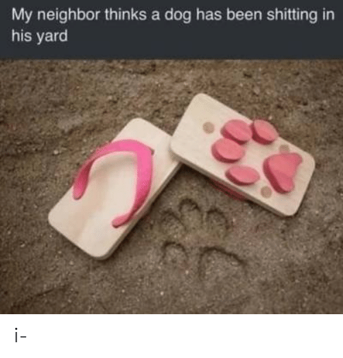 Shitting: My neighbor thinks a dog has been shitting in  his yard i-