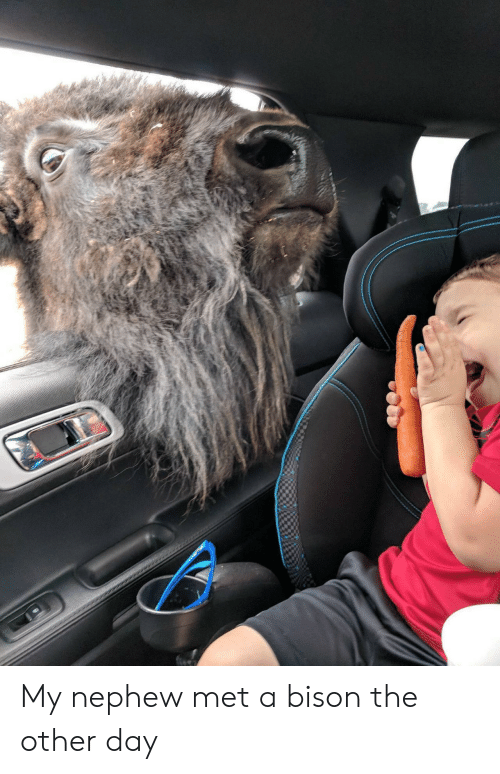 bison: My nephew met a bison the other day