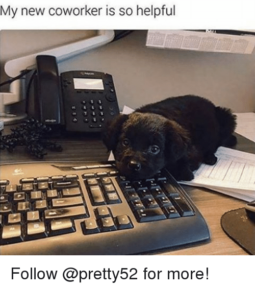 Memes, 🤖, and Following: My new coworker is so helpful Follow @pretty52 for more!