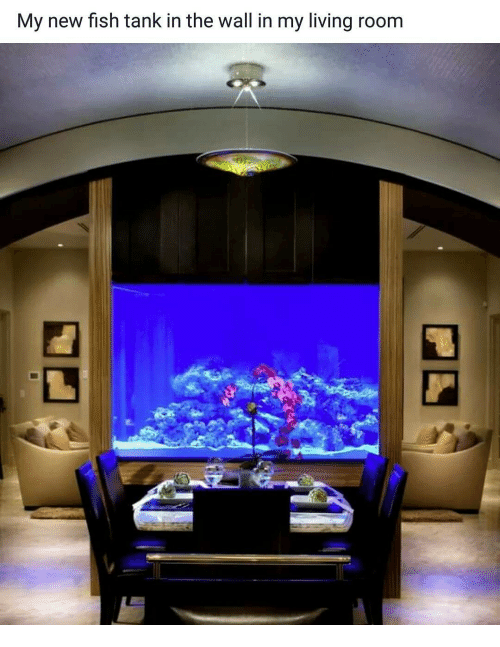 My New Fish Tank In The Wall In My Living Room Meme On