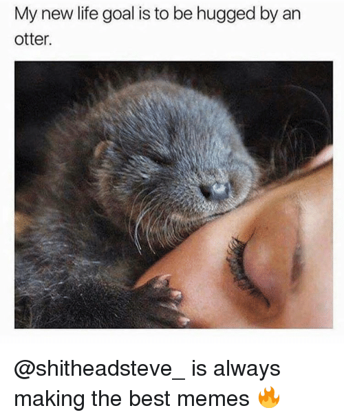 Memes, 🤖, and Otter: My new life goal is to be hugged by an  otter. @shitheadsteve_ is always making the best memes 🔥