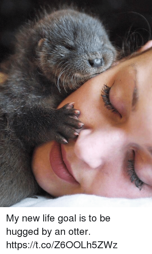 Otterly: My new life goal is to be hugged by an otter. https://t.co/Z6OOLh5ZWz