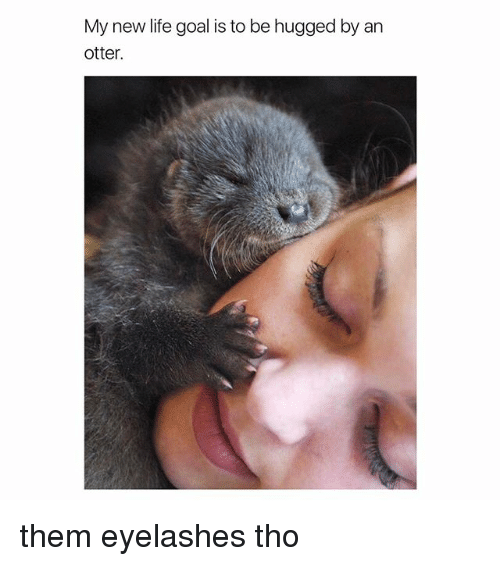 Otterly: My new life goal is to be hugged by an  otter. them eyelashes tho