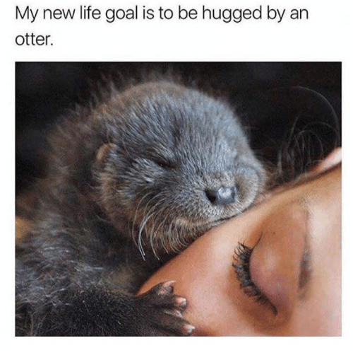 Otterly: My new life goal is to be hugged by an  otter.