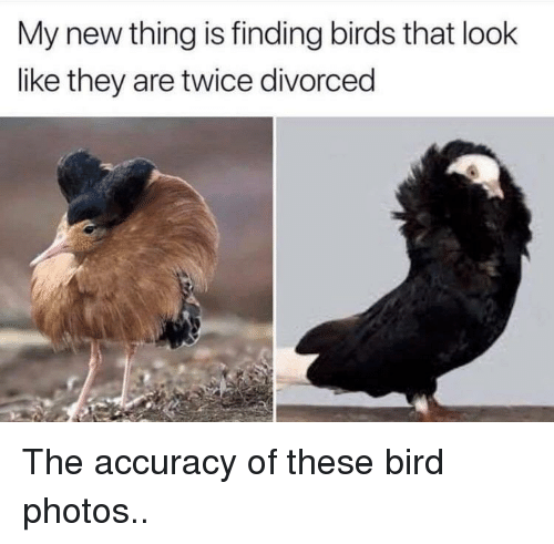 accuracy: My new thing is finding birds that look  like they are twice divorced The accuracy of these bird photos..