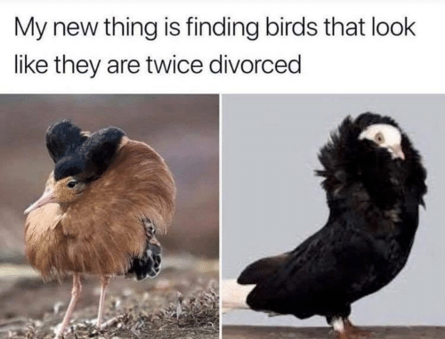 Divorced: My new thing is finding birds that look  like they are twice divorced