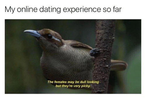 My online dating experience in Melbourne