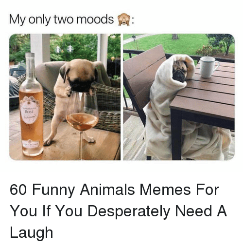 Animals Memes: My only two moods  ROSE 60 Funny Animals Memes For You If You Desperately Need A Laugh