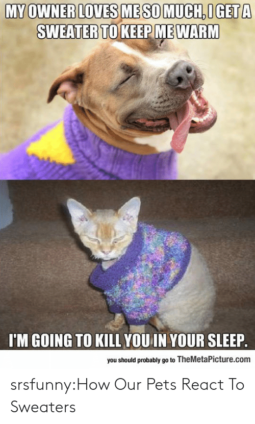 Im Going To Kill You: MY OWNER LOVES ME SO MUCH OGET A  SWEATERTO KEEP MEWARM  I'M GOING TO KILL YOU IN YOUR SLEEP  you should probably go to TheMetaPicture.com srsfunny:How Our Pets React To Sweaters