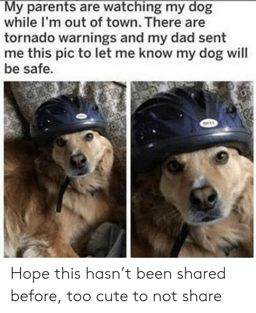Tornado: My parents are watching my dog  while I'm out of town. There are  tornado warnings and my dad sent  me this pic to let me know my dog will  be safe. Hope this hasn't been shared before, too cute to not share