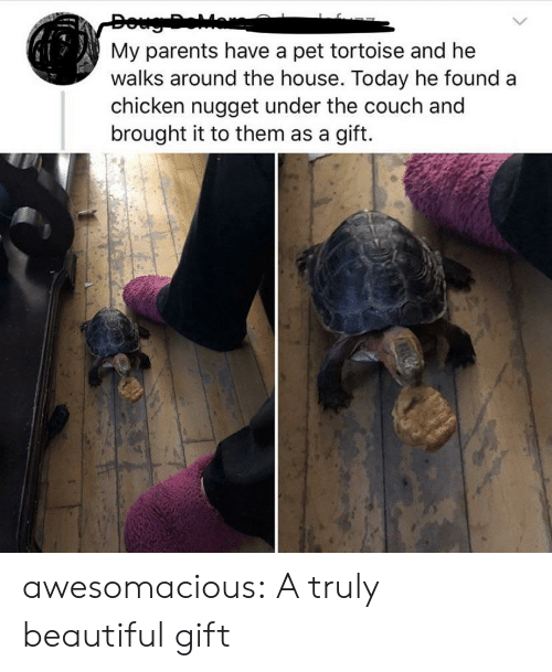 nugget: My parents have a pet tortoise and he  walks around the house. Today he found  chicken nugget under the couch and  brought it to them as a gift. awesomacious:  A truly beautiful gift