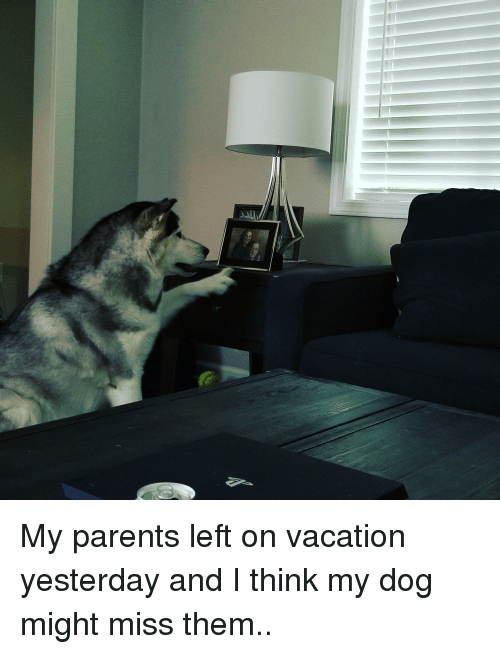 freya: My parents left on vacation yesterday and I think my dog might miss them..