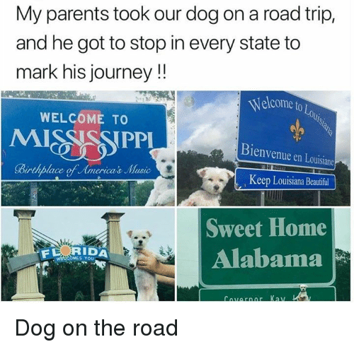 Beautiful, Journey, and Music: My parents took our dog on a road trip,  and he got to stop in every state to  mark his journey!!  Welcome to Lo  WELCOME TO  Bienvenue en Louisiane  Birthplace of Americas Music  Keep Louisiana Beautiful  Sweet Home  Alabama  RIDA  S YOU Dog on the road