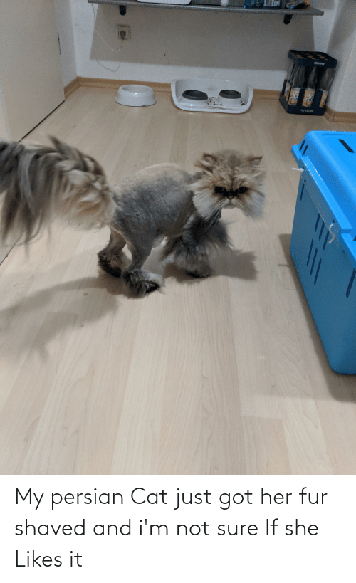 persian cat: My persian Cat just got her fur shaved and i'm not sure If she Likes it