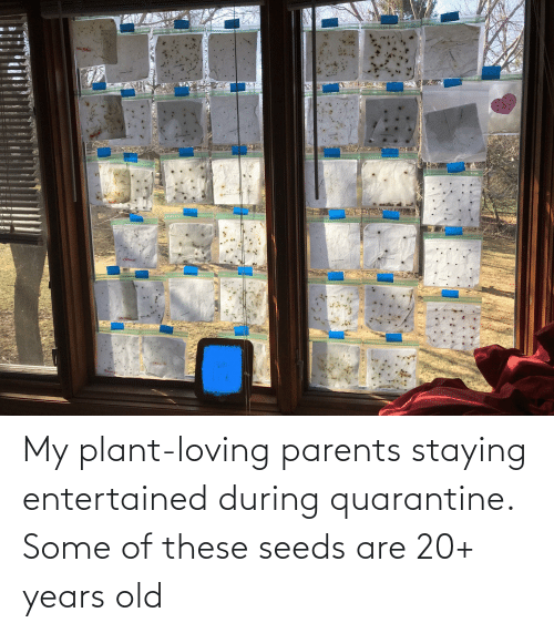 seeds: My plant-loving parents staying entertained during quarantine. Some of these seeds are 20+ years old