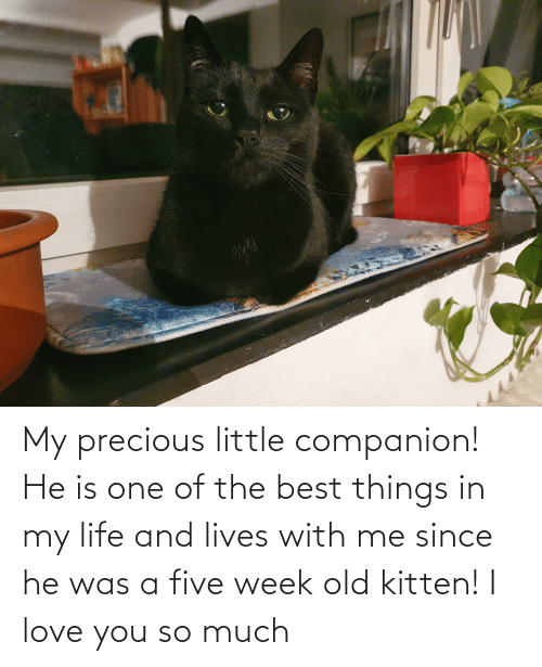 love you so much: My precious little companion! He is one of the best things in my life and lives with me since he was a five week old kitten! I love you so much