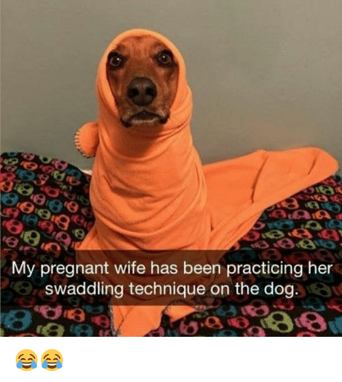 Memes, Pregnant, and Wife: My pregnant wife has been practicing her  swaddling technique on the dog. 😂😂